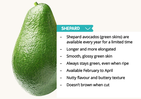 Avocado Types Pictures